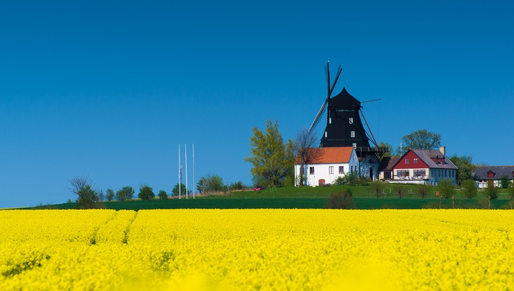 Kronetorps Mölla is a windmill from 1841, located just outside Malmö. It is surrounded by fields of rapeseed, which have a magnificent colour when blooming.